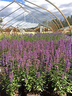 PMO-web-greenhouse